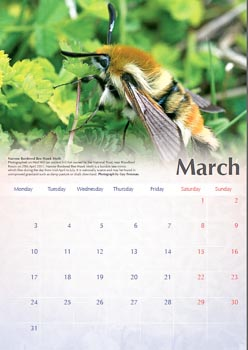 Calendar page for March showing a Narrow-bordered Bee Hawk-moth
