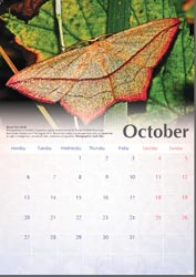 Calendar page for October with Blood-vein moth