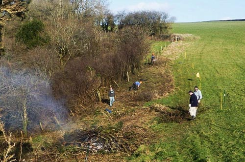 Volunteers clearing the fenceline ready for the new fence