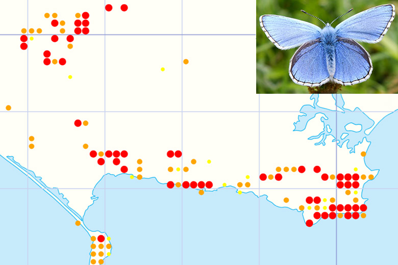 Distribution map for Adonis Blue