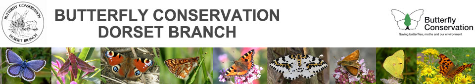 Butterfly Conservation - Dorset Branch